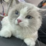 Groomed cat